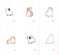 collection of guinea pigs