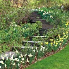 Escalier de jardin en bois<br />Jardin de Berchigranges - L. Hégo - Rustica