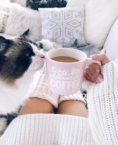 National Relaxation Day: 6 Best Ways To Chill With Your Cat - CatTime
