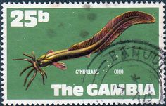 Gambia 1971 Fish SG 27 West African Eel Used SG 279 Scott 261 Other British Commonwealth Empire and Colonial stamps Here