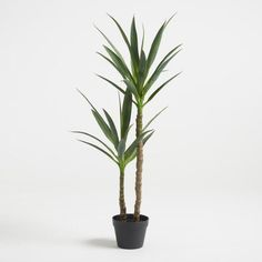 Two realistic stalks topped with spiky evergreen leaves, our faux yucca tree boasts a bold silhouette and effortless desert flair. Yucca Tree, Yucca Plant, Fake Trees, Potted Trees, Potted Plants, Indoor Plants, Indoor Outdoor, Fake Plants, Artificial Plants