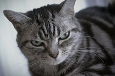 haha love this cat's face
