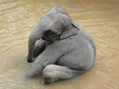 Don't ask me why but I think elephants are adorable! =))