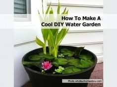 DIY Container Water Garden a fresh approach to gardening with a cool water garden