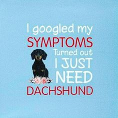 Dachshund dachshund accessories, funny pet memes, crusoe the celebrity dachshund dachshund puppy funny, mini dachshund full grown, funny weiner dogs Dachshund Funny, Dachshund Breed, Long Haired Dachshund, Dachshund Love, Daschund, Dachshund Facts, Dachshund Quotes, Dog Quotes, Qoutes