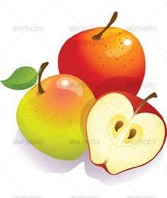 VECTOR DOWNLOAD (.ai, .psd) :: http://vector-graphic.de/pinterest-itmid-1000120337i.html ... Apples ...  apple, clean, food, fresh, fruit, green, harvest, healthy, juicy, organic, red, ripe, vectot, vegetarian, vitamin  ... Vectors Graphics Design Illustration Isolated Vector Templates Textures Stock Business Realistic eCommerce Wordpress Infographics Element Print Webdesign ... DOWNLOAD :: http://vector-graphic.de/pinterest-itmid-1000120337i.html