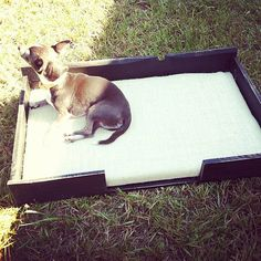 Salvaged Wood Pallet Dog Bed with burlap pad--Personalize with pet name