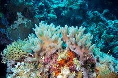 Underwater Photography of Corals by Alexander Semenov from Russia