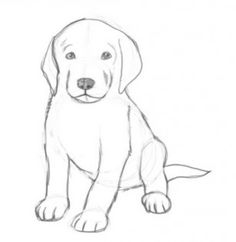 Pics For > Easy Drawings Of Cute Dogs                              …