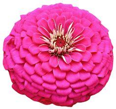 transparent-flowers:  Pink flower from theZinniagenus.