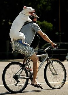 From my favorite blog, Content in a Cottage: this person rides around with his dog on his back for more than 2 miles. They are both a local attraction somewhere in California.