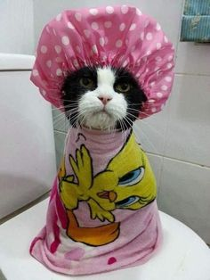 27 Cats Who Are A Better Human Than You