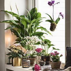 Syksyn puhutuimmat kasvitrendit