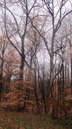 Allow nature to teach you stillness.  #Eckhart Tolle