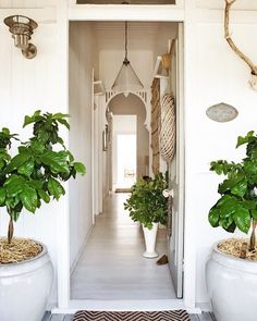 It's time to dust away the winter blues and bringing a fresh new outlook to your home feeling so inspired by these two giant pots and the white wash touch of this tiny yet beautiful entrance via Pinterest