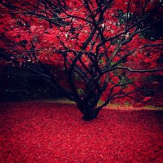 Japanese Maple Tree!!!                 ~Estravagant~