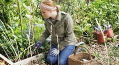 Here is what you need to know to start your own organic vegetable garden. From site selection to figuring out the right size, to amending the soil and planting your new organic vegetable garden. Vegetable Garden Soil, Vegetable Garden Planner, Small Vegetable Gardens, Starting A Vegetable Garden, Vegetable Design, Gardening Vegetables, Container Vegetables, Organic Vegetables, Growing Vegetables