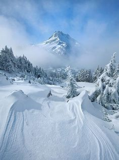 28 #Snowy Scenes That Will Make You Want to Take a Winter Vacation ...
