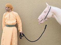 Animais, domésticos e selvagens, protagonizam lindas cenas (© Chris Jackson/Getty Images)