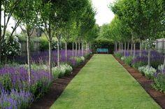 agapanthus garden - Google Search