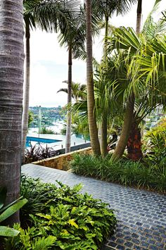 Tropical garden transformation: entertainer's dream. Photography by Natalie Hunflvay. Design by Outdoor Establishments (outdoorestablishments.com). From the September issue of Inside Out magazine. Available from newsagents, Zinio, https://au.zinio.com/magazine/Inside-Out-/pr-500646627/cat-cat1680012#/ Google Play, https://play.google.com/store/newsstand/details/Inside_Out?id=CAowu8qZAQ, Apple's Newsstand, https://itunes.apple.com/au/app/inside-out/id604734331?mt=8&ign-mpt=uo%3D4, and Nook.