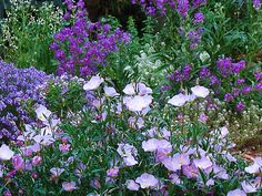 purple-garden by Wright Reading, via Flickr