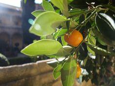 España sabe a mandarinas a punto de ser comidas #saboreaespaña