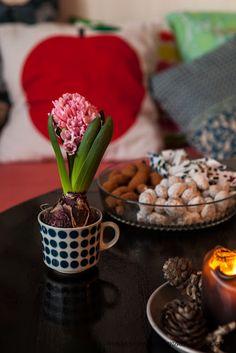 hyacinth in a coffee cup   from moderni mummola