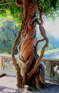 Entwined at Biltmore Estate, Asheville, NC