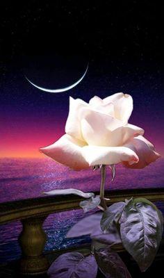Beautiful moon and rose. Beautiful Moon Images, Beautiful Roses, Rose Images, Rose Pictures, Flower Collage, Flower Art, Art Floral, Good Night Flowers, Cute Good Night