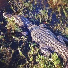 Only place I've been to in Florida is Disney World
