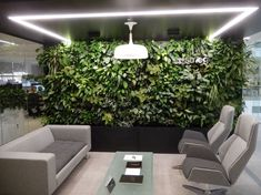 Lockdown has reminded us Green Spaces Matter! We can provide your office with lots of healthy greenery. Offices Plants rented & maintained. www.officelandscapes.co.uk Indoor Office Plants, Space Matters, Contemporary Office, Pictures Online, Offices, Greenery, Spaces, Healthy, Desk