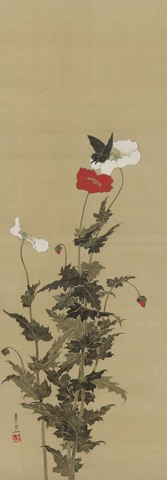 Poppies and Butterfly early-mid-17th century Suzuki Kiitsu  repinned by www.lecastingparisien.com