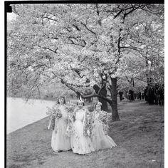 Ghost of DC: 1936 Cherry Blossom Festival