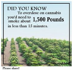 Please SHARE if you learned something new today! #FunFactFriday #Cannabis