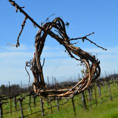 Wishing you and yours a very Happy Valentine's Day from all of us here at Hafner Vineyard.