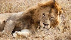 TANZANIA | Ngorongoro crater