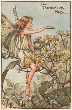 FLOWER FAIRIES/BOTANICALS: The Traveller's Joy Fairy; This is an original vintage Cicely Mary Barker Flower fairies colour print. It is not a modern reproduction, c1935; approximate size 11.0 x 7.0cm, 4.25 x 2.75 inches