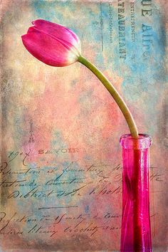 """http://www.msjphotography.com Photoshop Workbench 351 - French Kiss Painterly Texture Montage. In this video tutorial, you'll learn how to create a flower portrait using a texture and a vintage French script overlay from the French Kiss l'Artiste Collection as well as a texture from the Craquelure Collection. (To get a 15% discount on French Kiss Collections, go to http://wig.bz/13i and use Code """"MSJPhoto"""" at checkout.)"""