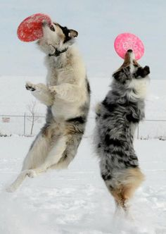 dogs just want 2 have fun together if possible