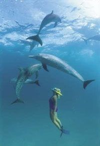 Go swimming with dolphins