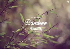 Bamboo Caffe logo / repinned on toby designs