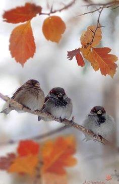 Three Little Birds Beautiful Birds, Animals Beautiful, Cute Animals, Beautiful Days, Autumn Day, Autumn Leaves, Animal Photography, Nature Photography, Autumn Scenes