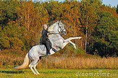 White Pura Raza Espanola Horse Rearing in Autumn