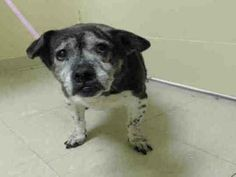 SUPER URGENT 04/09/14 Staten Island Center   PRINCESS - A0996127   SPAYED FEMALE, BLACK / WHITE, JACK RUSS TERR, 15 yrs OWNER SUR - EVALUATE, NO HOLD Reason MOVE2PRIVA Intake condition GERIATRIC Intake Date 04/09/2014, From NY 10301, DueOut Date 04/09/2014, https://www.facebook.com/photo.php?fbid=784709171541964&set=a.617942388218644.1073741870.152876678058553&type=3&theater