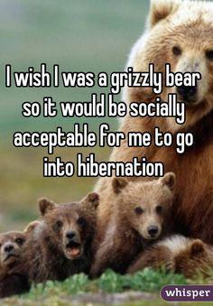 I often joke that I have some bear DNA, but really...