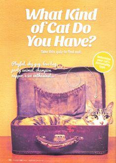 Modern Cat Fall 2015 article.jpg