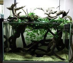 Low tech planted tank