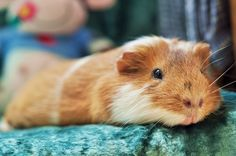 This is one content piggy!