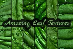 Check out Leaf Textures by Mihaly on Creative Market